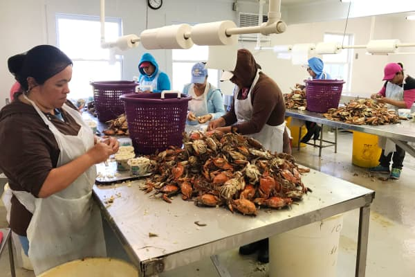 Crab Pickers in G.W. Hall and Sons Seafood company.