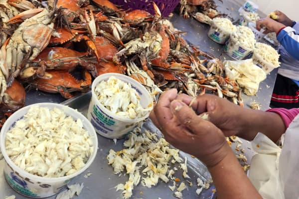 Crabs are picked and packaged at G.W. Hall and Sons Seafood company.