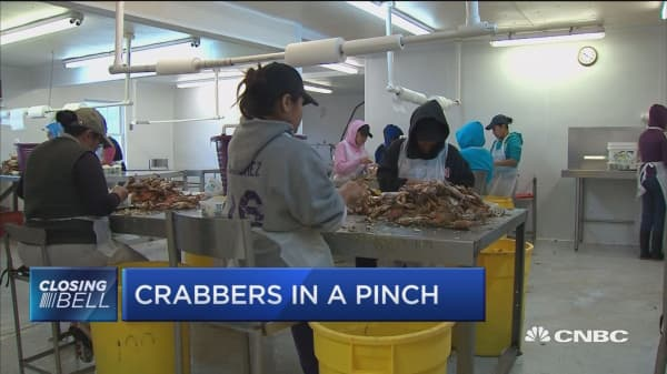 Immigration rules threaten crabbing industry