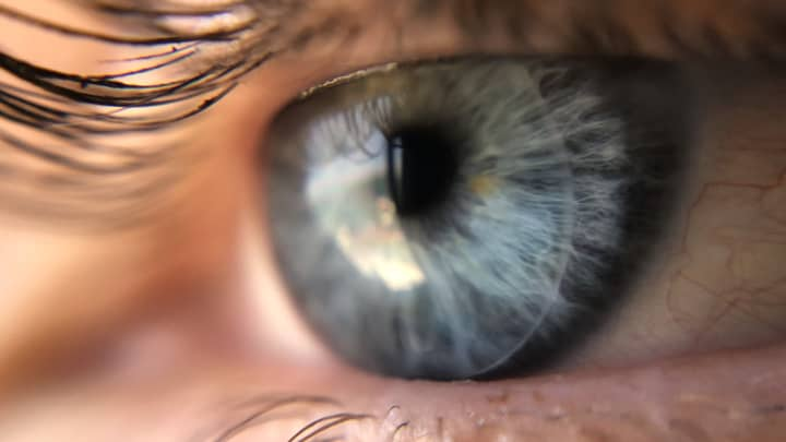 Macro lenses let you shoot extreme close-ups.