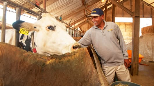 Ermias Kebreab, University of California at Davis animal science professor, who is studying ways to reduce methane emissions from gassy cows.