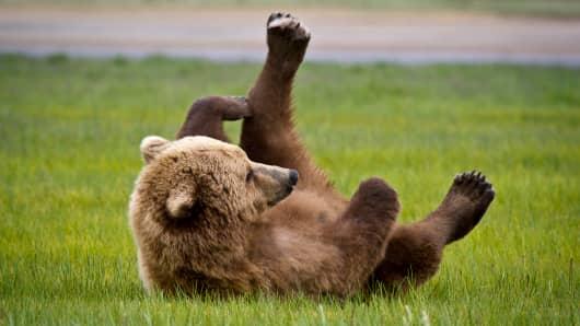 A bear rolling in a field.