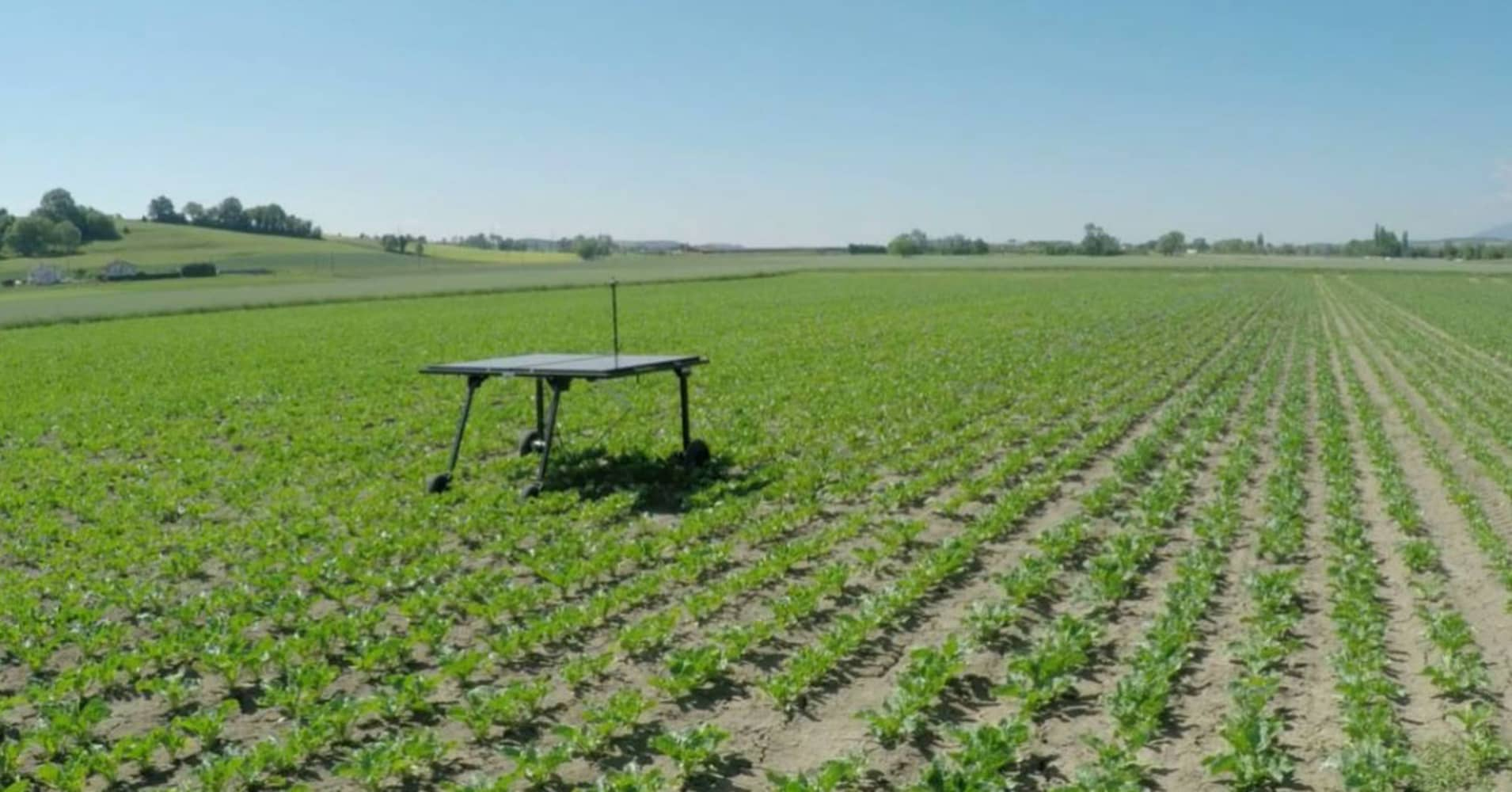 This weed-killing AI robot can tell crops apart