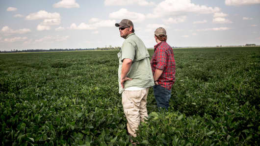Soybean farmers in Mississippi County, Ark.