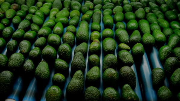 Costco is selling special avocados that stay ripe for twice as long, thanks to this Bill Gates-backed start-up