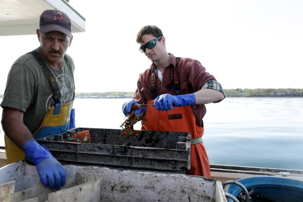 Modern lobster harvesters haul lobsters by hand in traps.