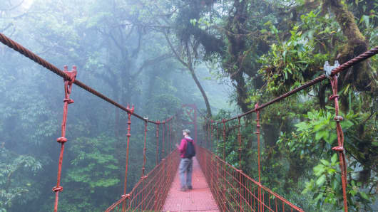 Tourist on a suspended bridge, Monteverde Cloud Forest, Costa Rica