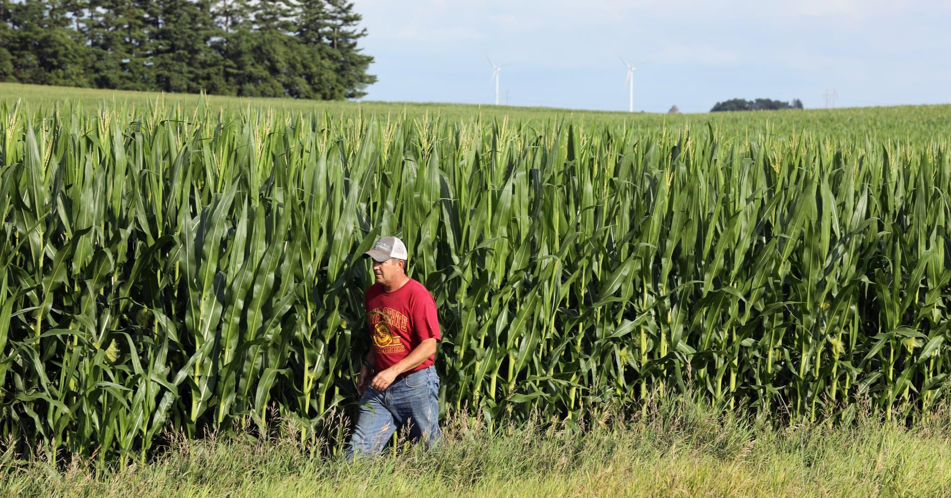 Kentucky Soybean Farmers Feeling the Financial Strain of