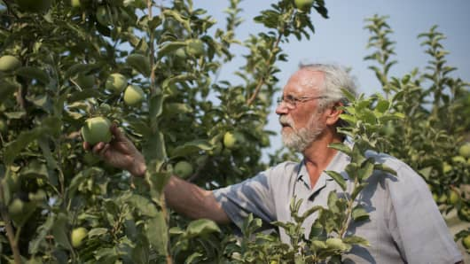 Rep. Dan Newhouse, R-Wash., picks apples on his farm. He wrote in April: 'When it comes to a trade war that exposes agriculture producers in Central Washington and elsewhere, farmers need a quick solution.'
