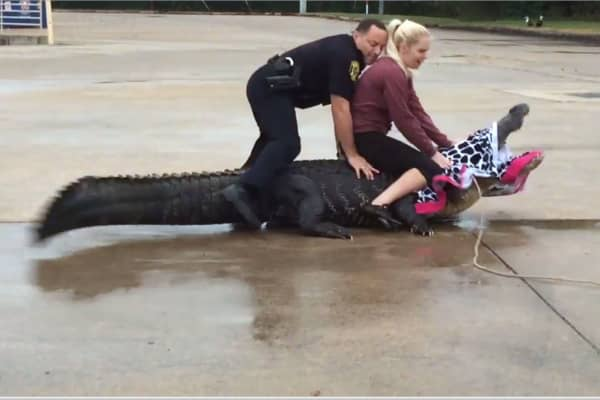 "When this alligator, dubbed ""Godzilla,"" showed up in the local Home Depot parking lot, Kroboth did not hesitate to jump on his back and tie him up."