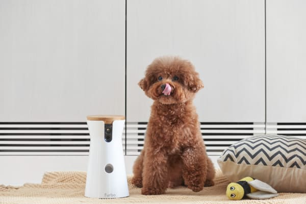 Furbo Dog Camera co-creators Victor Chang and Maggie Cheung's 10-year-old toy poodle, Gobi.