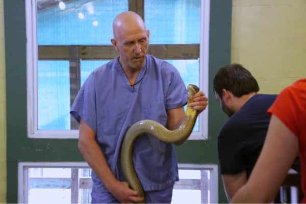 Jim wrangles the world's deadliest snakes at the Kentucky Reptile Zoo.