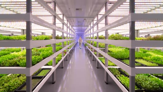 One of the nation's largest indoor vertical farms is about to launch in Las Vegas and eventually span more than 200,000 square feet.