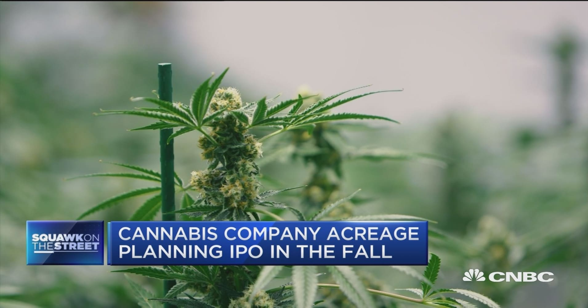 Cannabis company Acreage Holdings plans for Canadian IPO