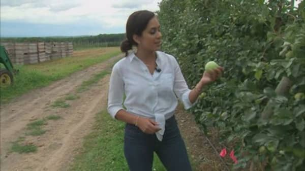 US Apple season to start soon, but farmers are worried. Here's why