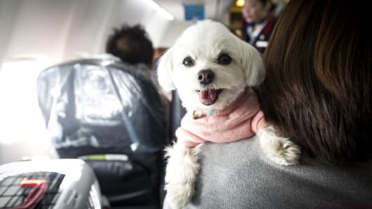 Image of: Aircraft Dog Is Seen On The Shoulder Of Its Owner In Plane Japan Airlines Cnbccom Southwest Tightens Emotionalsupport Animal Policy Bans Pigs Ferrets