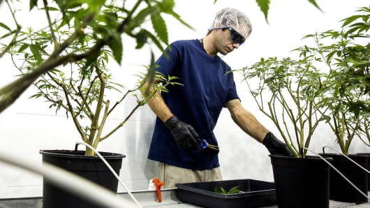 Employees work at the Canopy Growth facility in Smith Falls, Ontario, Canada, Dec. 19, 2017.
