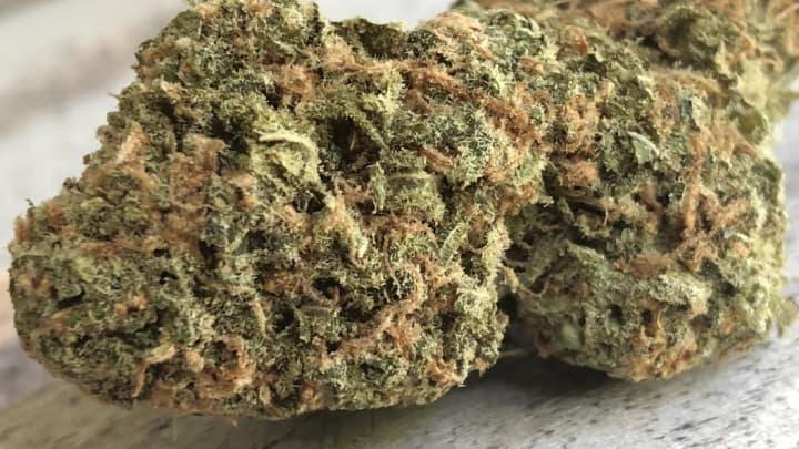A marijuana bud on display in Washington, D.C.