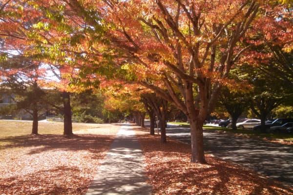 Sonoma State University inRohnert Park, California