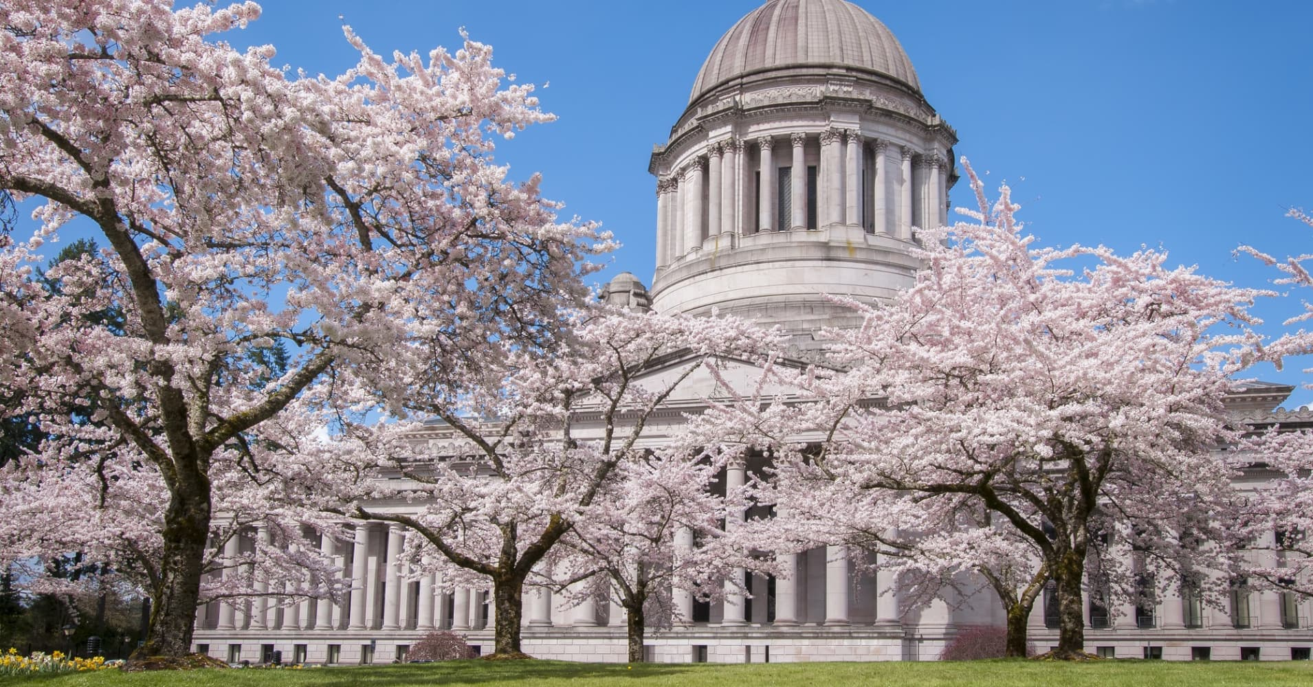 Washington State Capitol Legislative Building and blooming cherry trees in Olympia, Washington.