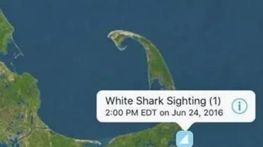 The Sharktivity app alerts users to shark sightings.