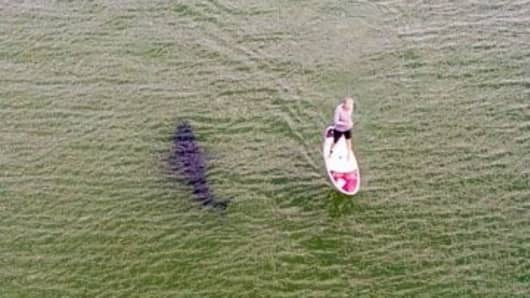 This photo of a paddle boarder, unaware that a great white shark was swimming beside him, was taken by a spotter plane just north of Nauset Beach on July 29, 2018.