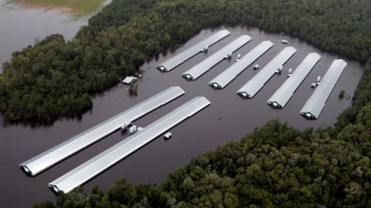 Image result for hurricane florence chickens