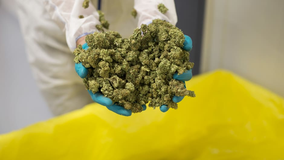 An employee displays cannabis buds for a photograph at the CannTrust Holding Inc. Niagara Perpetual Harvest facility in Pelham, Ontario, Canada, on Wednesday, July 11, 2018.