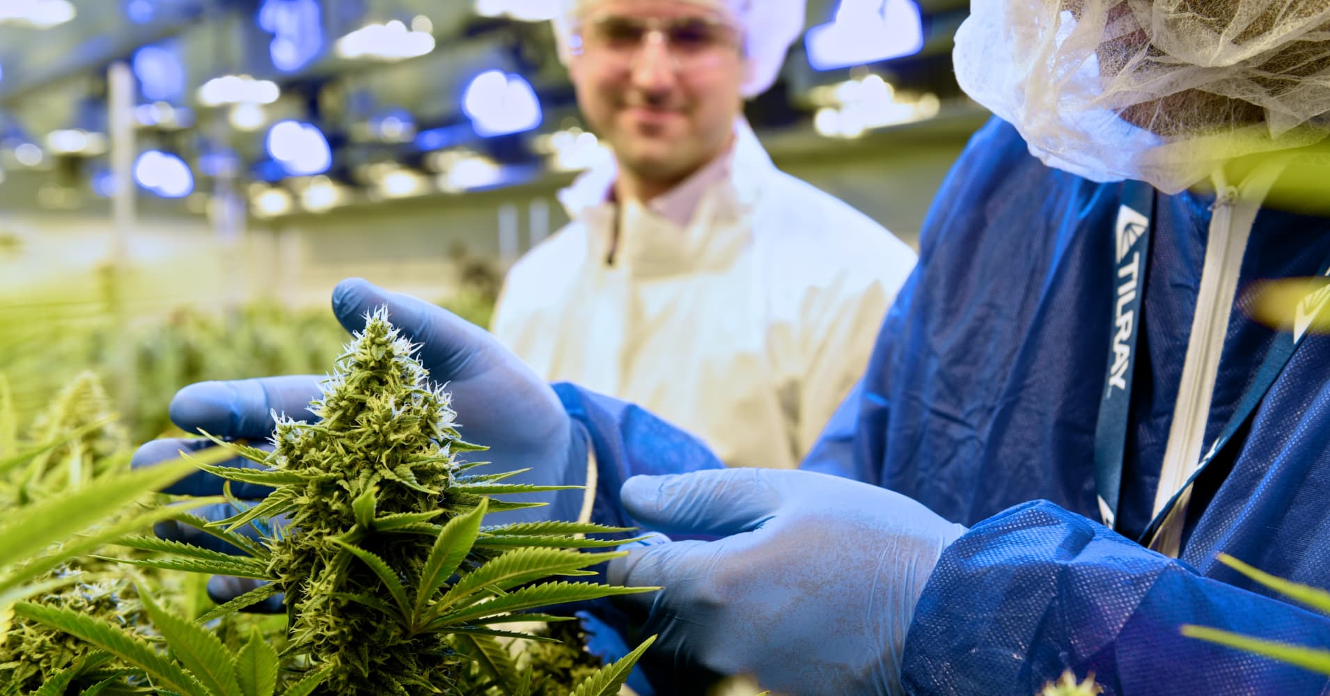 Marijuana grower Tilray rallies after sales more than double