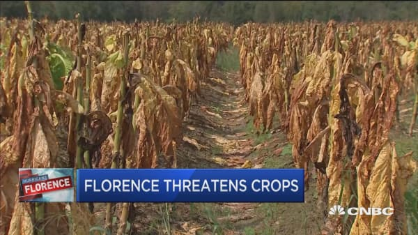 Post-Florence flooding threatens Carolina crops