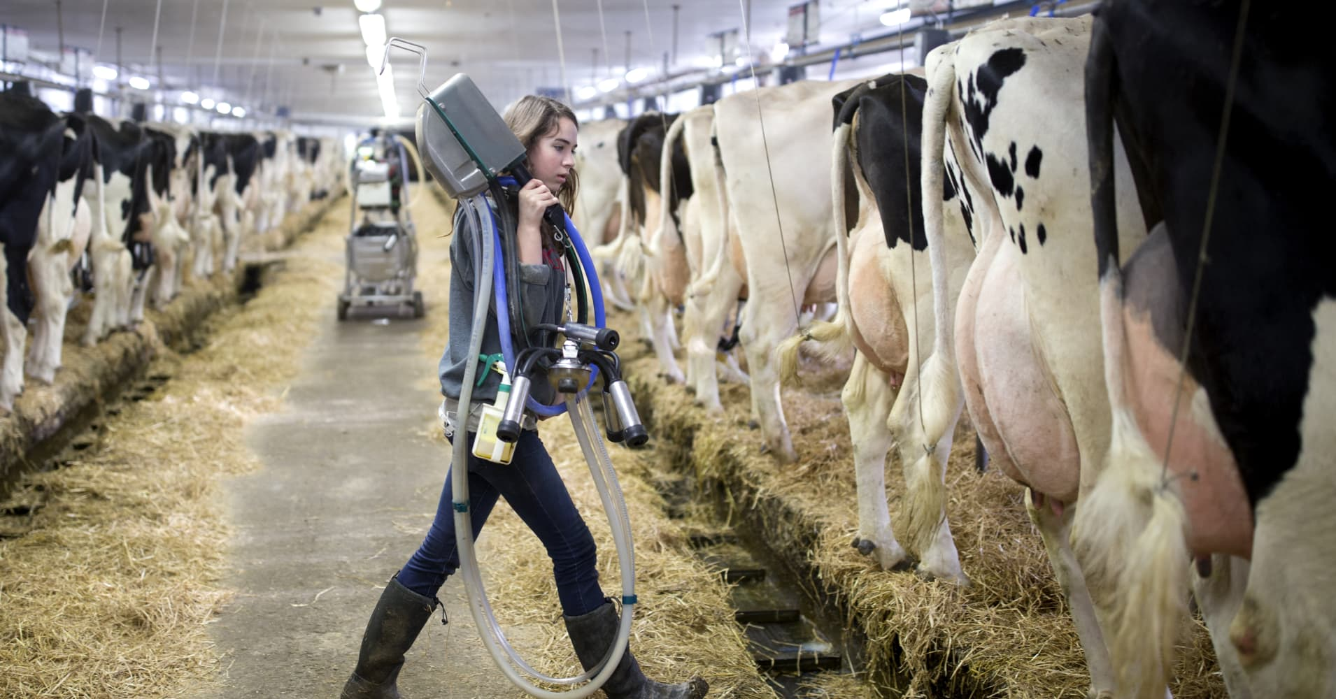 Here's the system Canada uses to protect its dairy farmers and why Trump hates it