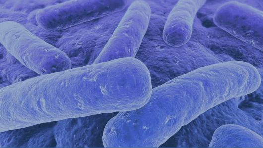 Deadly Cdiff bacteria
