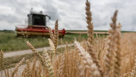 Harvest on a field of winter barley.