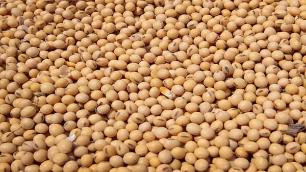 China tariffs hit the soybean harvest