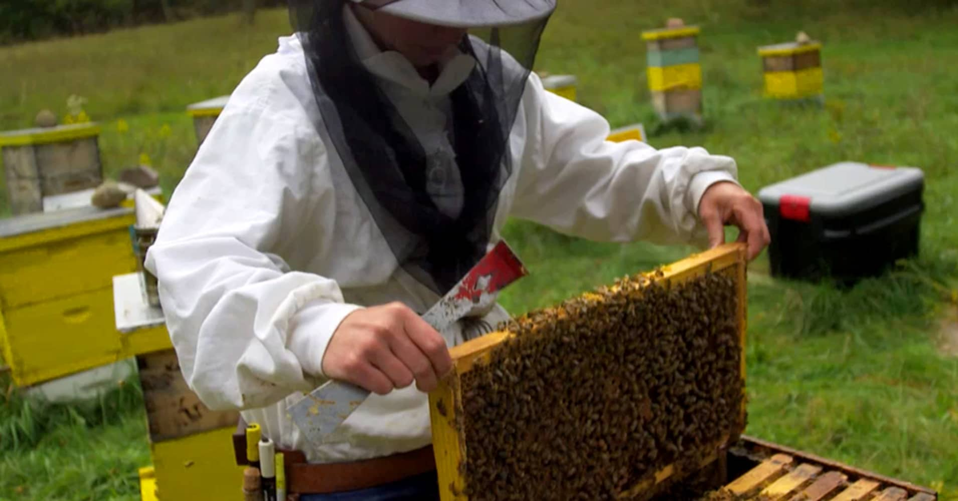 Beekeeper Kristy Allen. Photo courtesy of The Story Exchange.