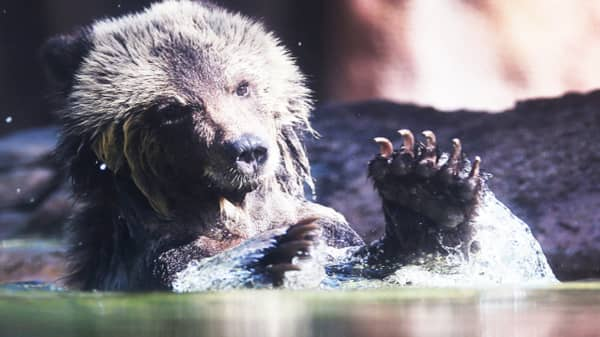 Reason for rolling bear market is that global liquidity is drying up, strategist says