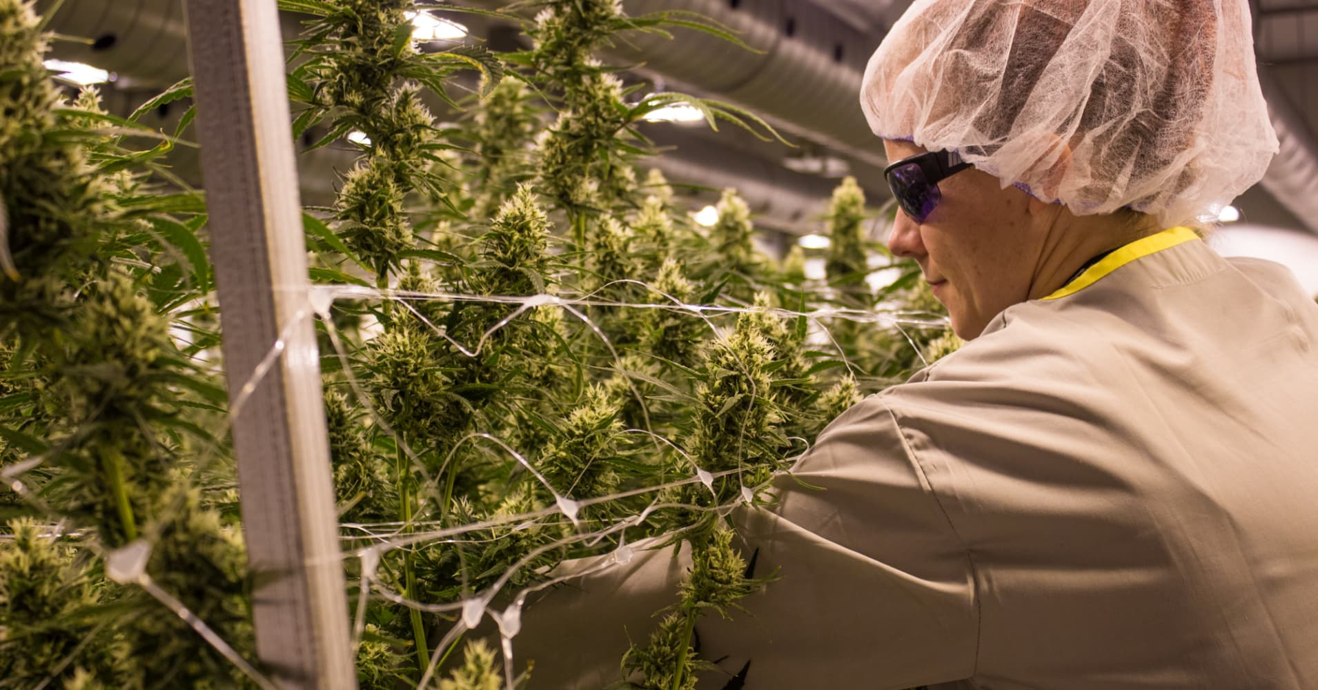 The marijuana industry looks like the fastest-growing job market in the country