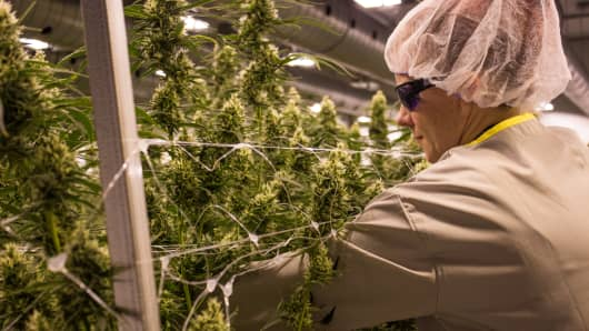 Canopy Growth operations in Smiths Falls, Ontario.