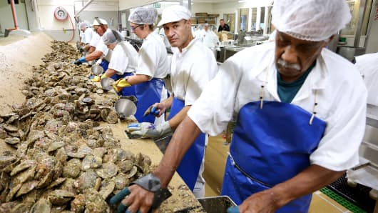 Factory workers at Barnes Wild Bluff Oysters factory open oysters on March 2, 2018 in Bluff, New Zealand.
