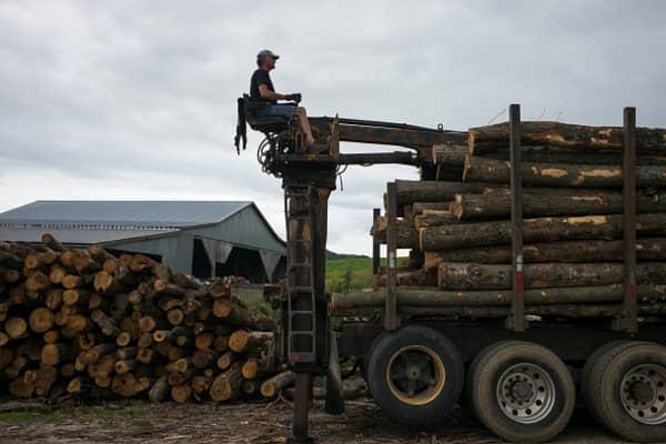 Truck driver maneuvers a hydraulic crane as he unloads hardwood logs.