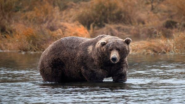 Trading Nation: Bears hunting Apple