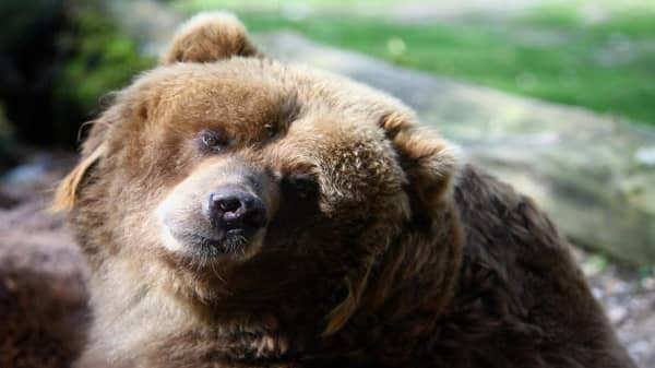 We could be in a bear market, but this expert sees opportunity for investors