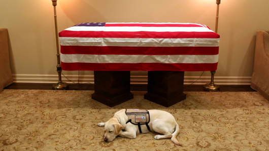 Sully, the service dog of former President George H.W. Bush in his final months, lays in front of Bush's casket at the George H. Lewis & Sons funeral home in Houston, Dec. 3, 2018.