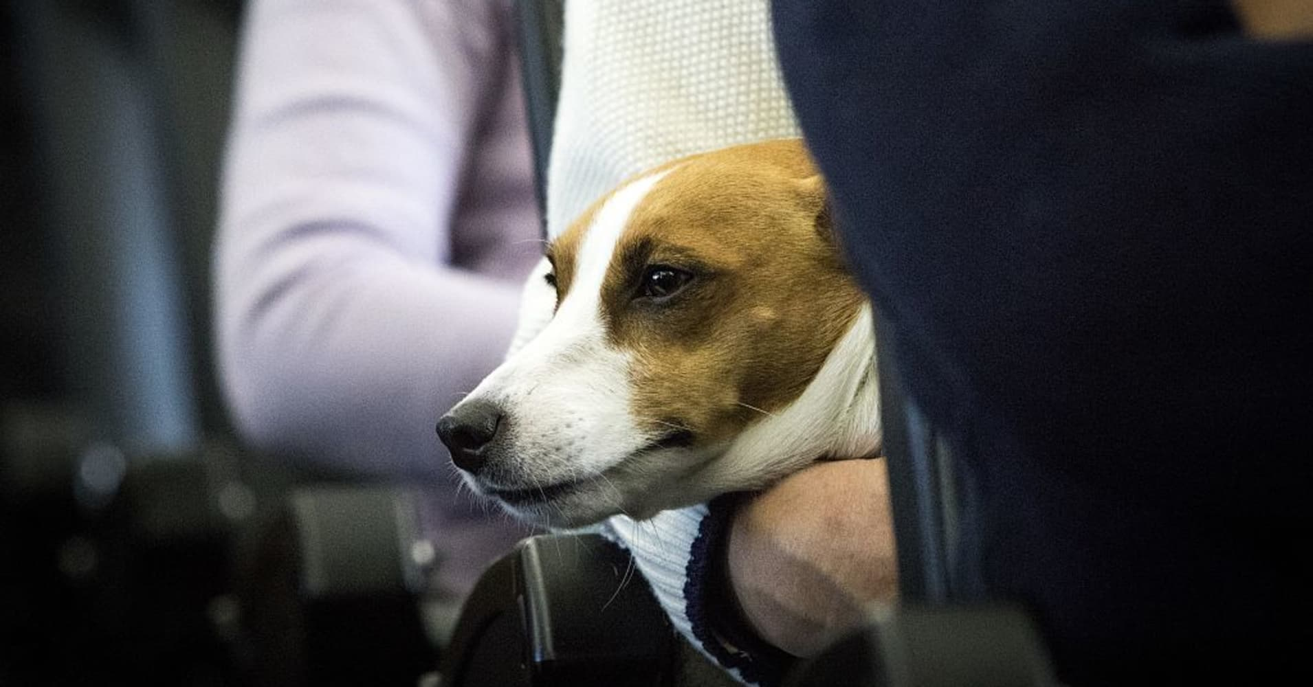 United Airlines joins Delta in banning emotional-support puppies and kittens
