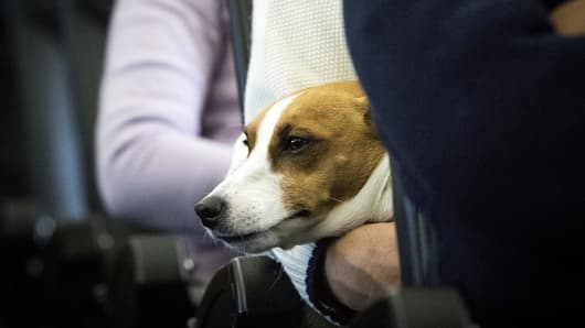 Image of: Southwest Dog Is Seen On The Lap Of Its Owner In Plane In Chiba Cnbccom United Airlines Bans Emotionalsupport Puppies And Kittens