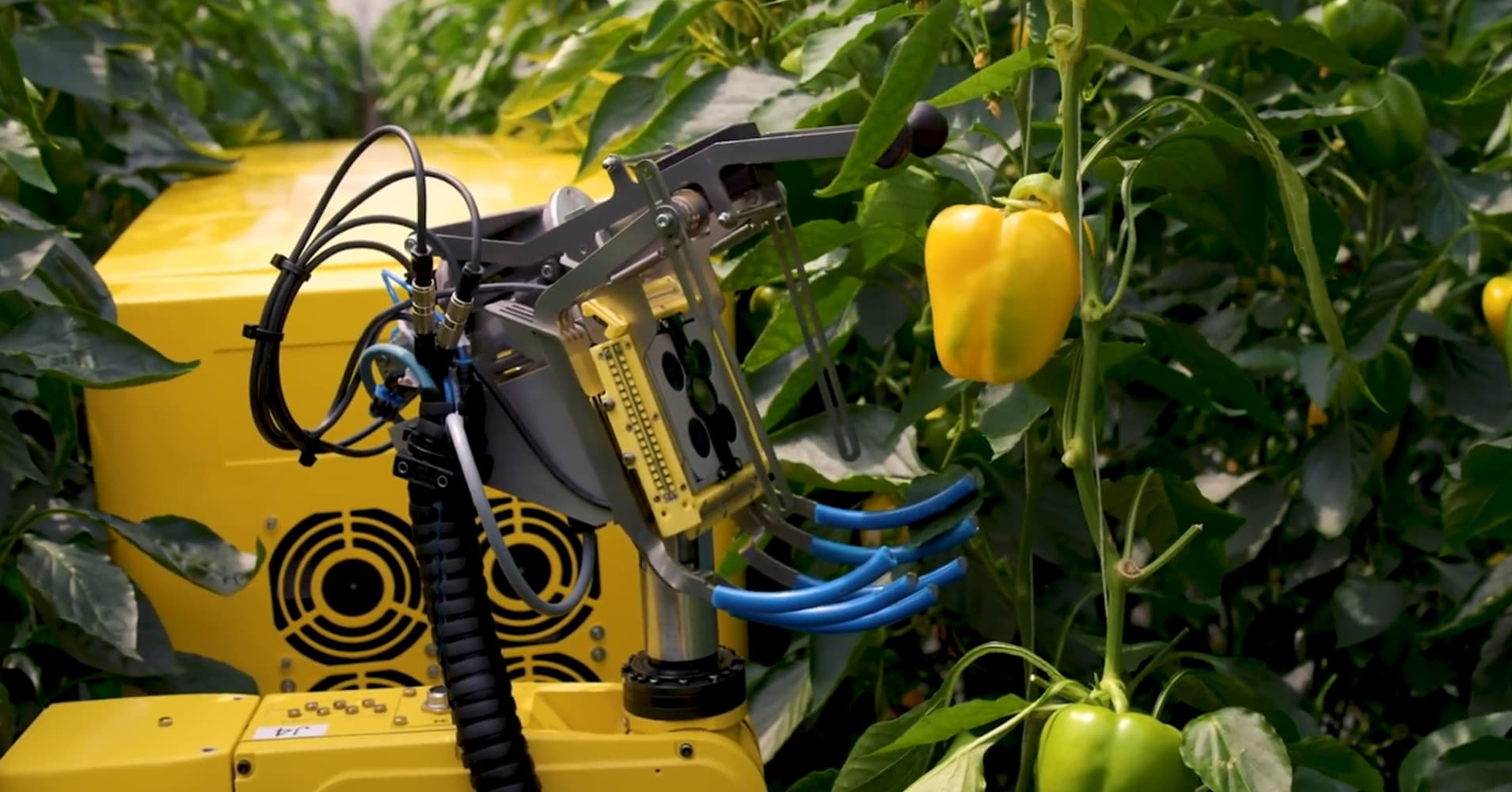 This Robot Picks a Pepper in 24 Seconds Using a Tiny Saw, and Could Help Combat Farm Labor Shortage