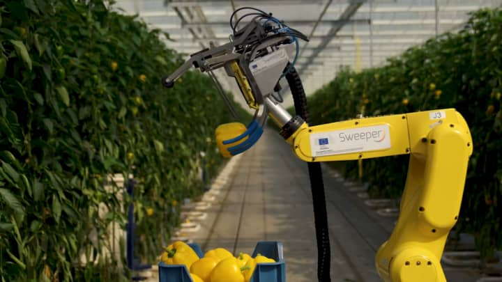 It takes 24 seconds for the Sweeper robot to pick a single pepper.