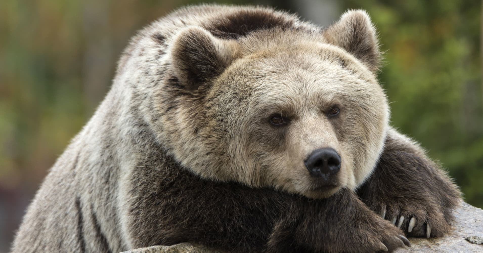 Don't panic: Here's your bear market survival guide