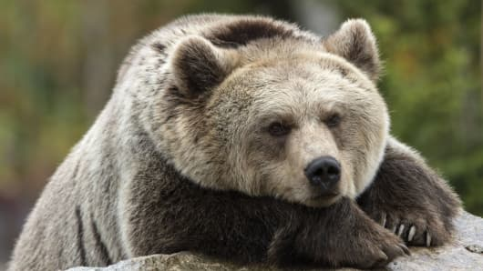 FRANCE-ZOO-ANIMALS-BEAR