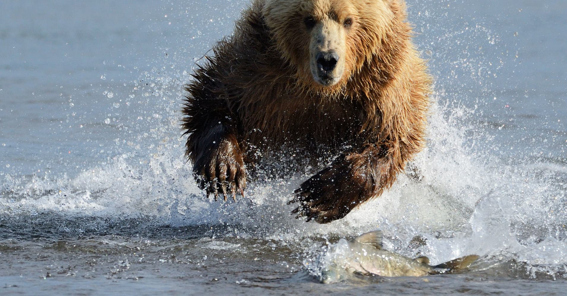 Cryptocurrency bear market 2020